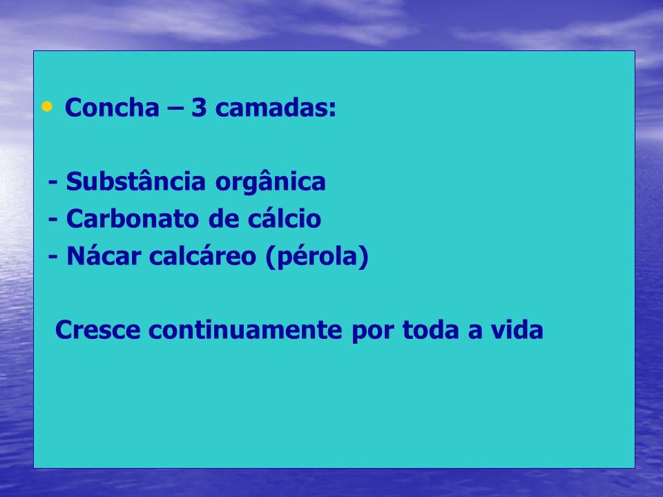 Concha – 3 camadas: - Substância orgânica - Carbonato de cálcio - Nácar calcáreo (pérola) Cresce continuamente por toda a vida