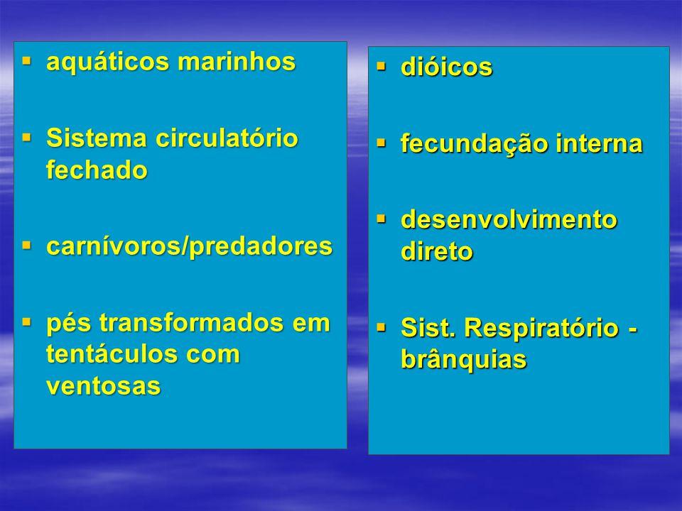  aquáticos marinhos  Sistema circulatório fechado  carnívoros/predadores  pés transformados em tentáculos com ventosas  dióicos  fecundação inte