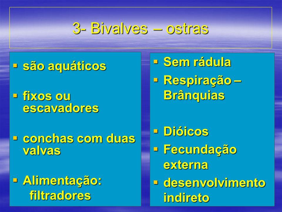 3- Bivalves – ostras  são aquáticos  fixos ou escavadores  conchas com duas valvas  Alimentação: filtradores filtradores  Sem rádula  Respiração