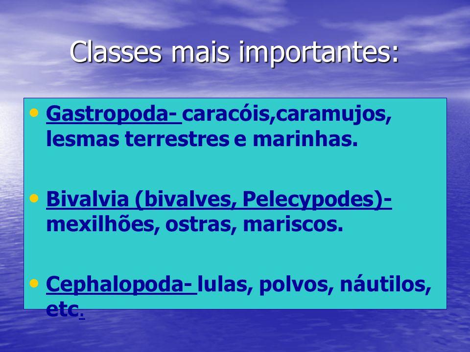 Classes mais importantes: Gastropoda- caracóis,caramujos, lesmas terrestres e marinhas. Bivalvia (bivalves, Pelecypodes)- mexilhões, ostras, mariscos.