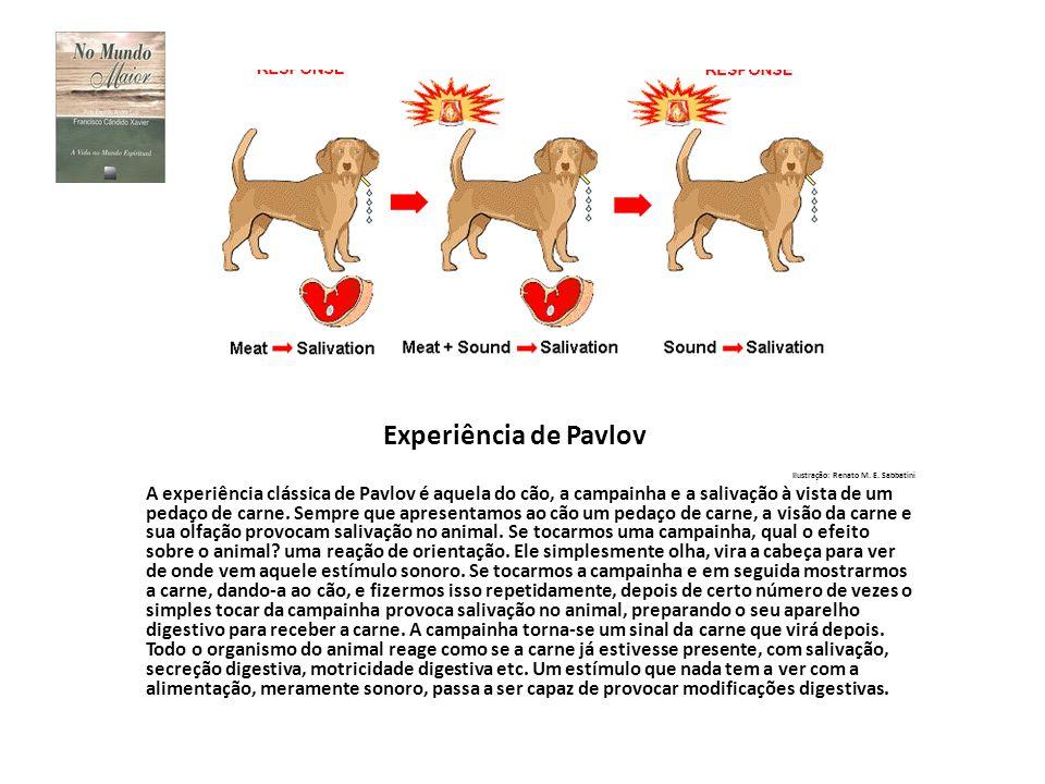 Experiência de Pavlov Ilustração: Renato M. E. Sabbatini A experiência clássica de Pavlov é aquela do cão, a campainha e a salivação à vista de um ped