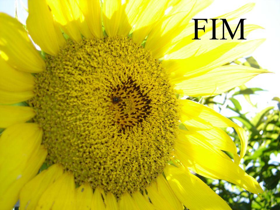 74 AGRADECIDO PELA ATENÇÃO DOCENTE Jaime Alexandre de Lima Curcio E-Mail: jaime.curcio@uol.com.brjaime.curcio@uol.com.br MSN jaime.curcio@uol.com.brjaime.curcio@uol.com.br Orkut: Jaime Brasileiro Curcio Skype: Jaime-Brasileiro Celular: (19) 9781-7897 www.propagandanacional.com.br [ ] Usem a Bandeira
