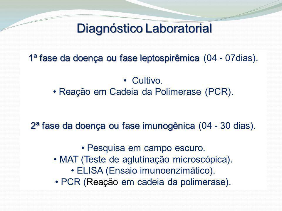 Diagnóstico Laboratorial 1ª fase da doença ou fase leptospirêmica 1ª fase da doença ou fase leptospirêmica (04 - 07dias). Cultivo. Reação em Cadeia da