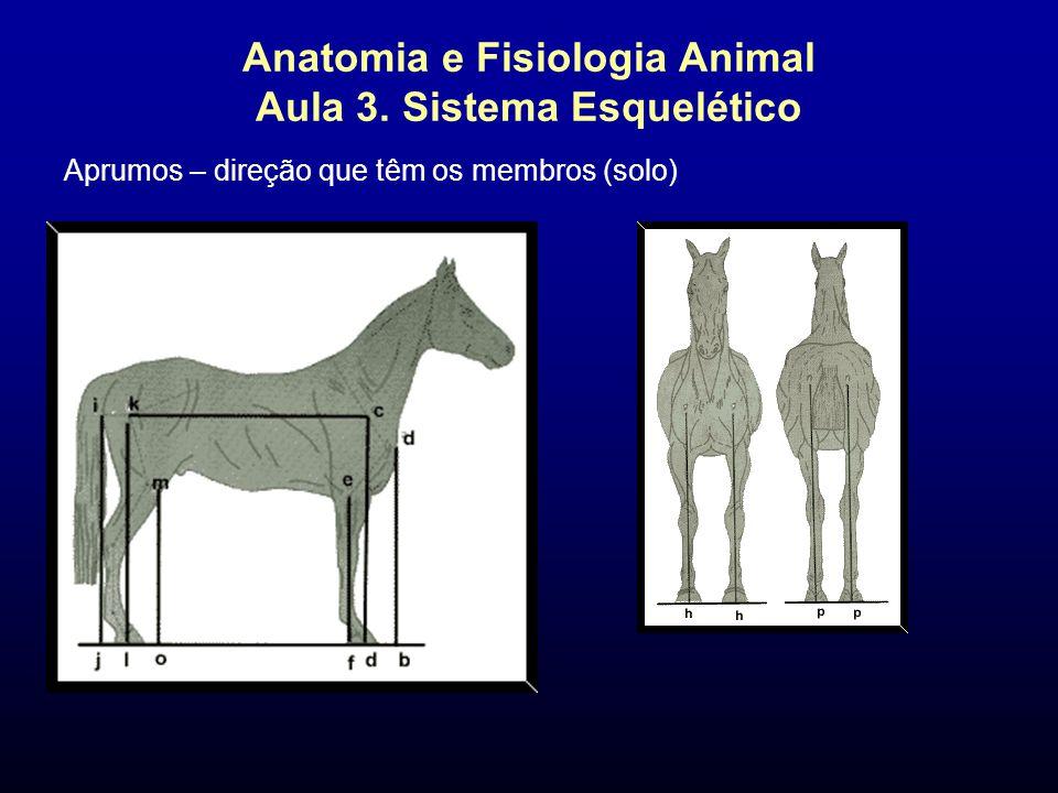 Anatomia e Fisiologia Animal Aula 3. Sistema Esquelético Aprumos – direção que têm os membros (solo)