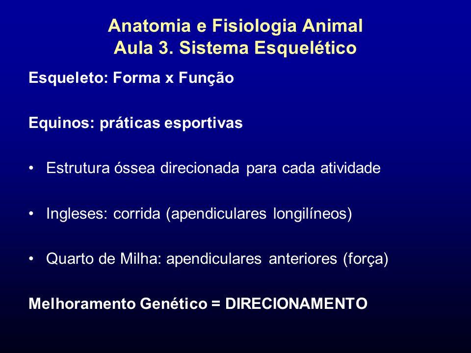 Anatomia e Fisiologia Animal Aula 3. Sistema Esquelético Esqueleto: Forma x Função Equinos: práticas esportivas Estrutura óssea direcionada para cada