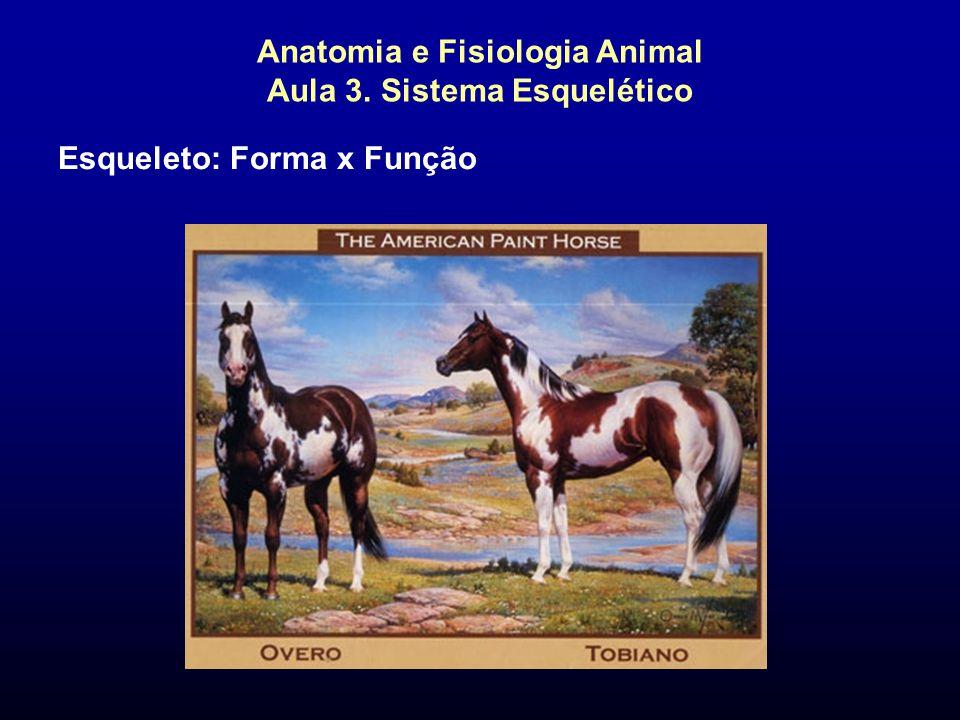 Anatomia e Fisiologia Animal Aula 3. Sistema Esquelético Esqueleto: Forma x Função