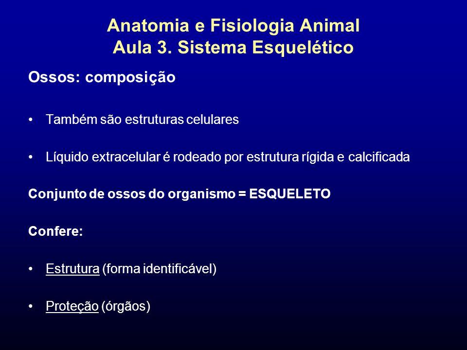 Anatomia e Fisiologia Animal Aula 3. Sistema Esquelético Ossos: composição Também são estruturas celulares Líquido extracelular é rodeado por estrutur