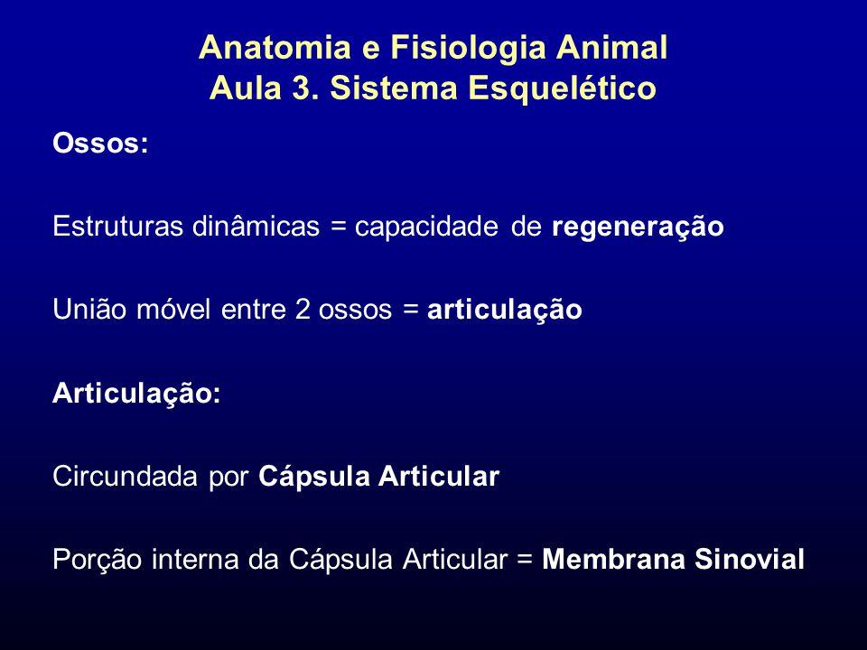 Anatomia e Fisiologia Animal Aula 3. Sistema Esquelético Ossos: Estruturas dinâmicas = capacidade de regeneração União móvel entre 2 ossos = articulaç