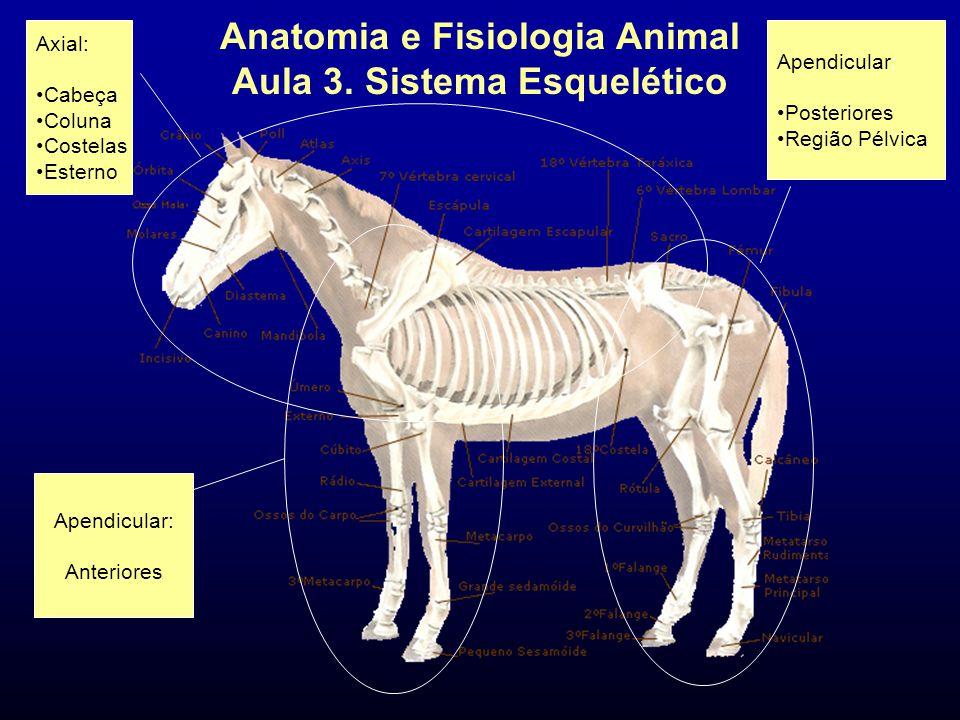 Anatomia e Fisiologia Animal Aula 3. Sistema Esquelético Apendicular: Anteriores Axial: Cabeça Coluna Costelas Esterno Apendicular: Posteriores Região