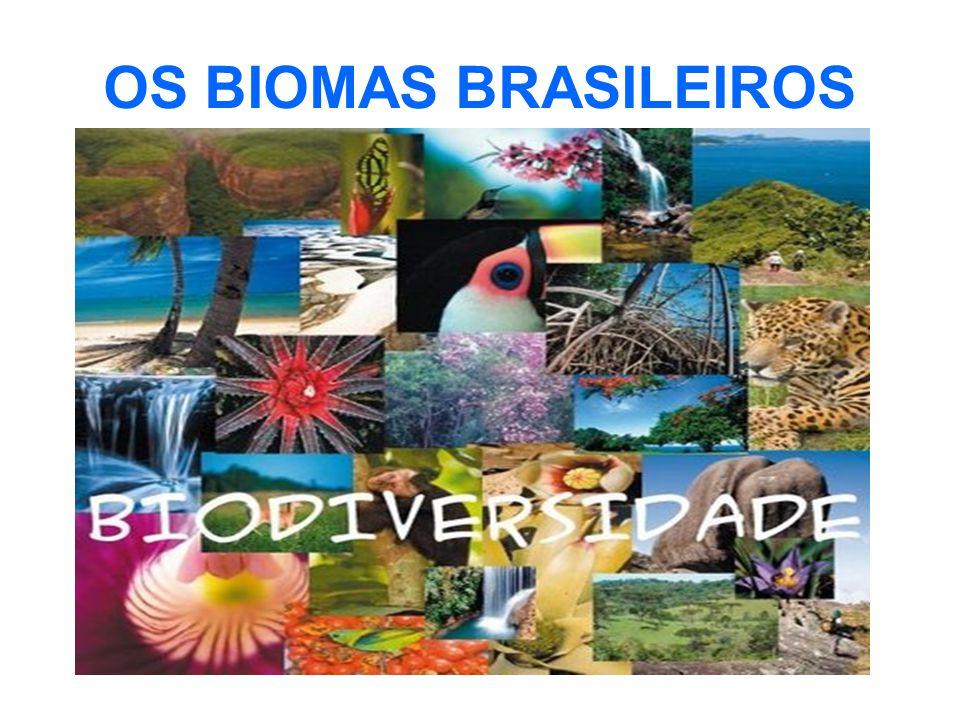 O Domínio da Mata Atlântica ou Bioma Mata Atlântica engloba uma área de 1.306.000 km², cerca de 15% do território nacional, cobrindo total ou parcialmente 17 estados brasileiros.