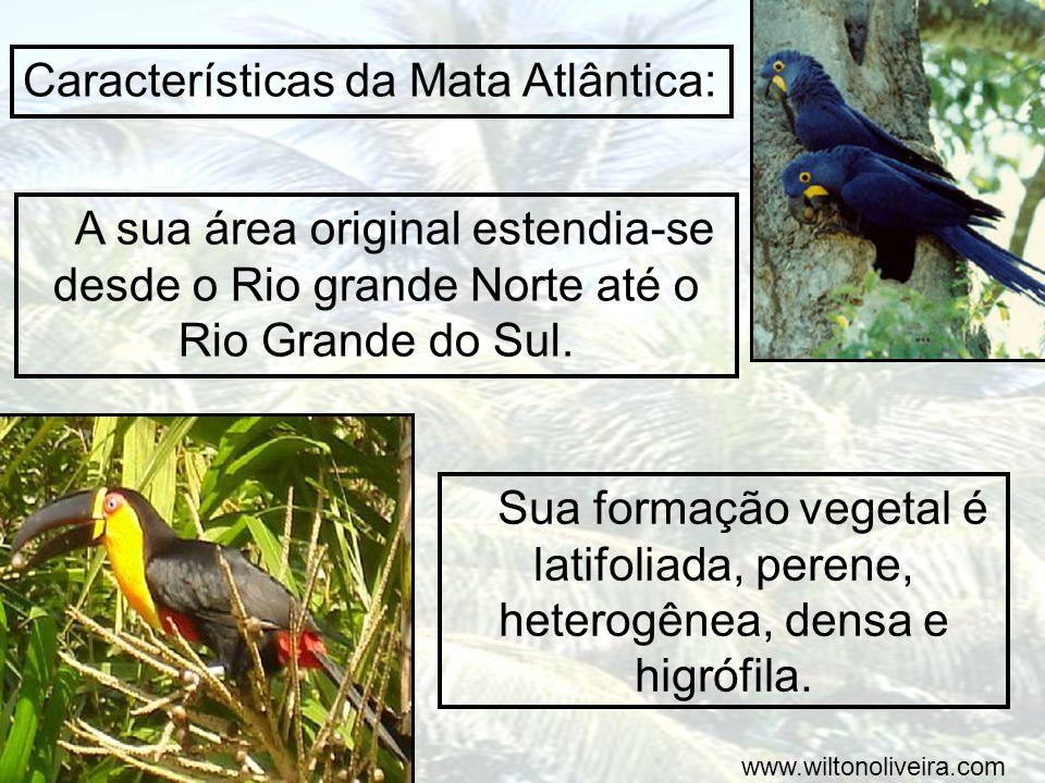 A sua área original estendia-se desde o Rio grande Norte até o Rio Grande do Sul. Características da Mata Atlântica: Sua formação vegetal é latifoliad