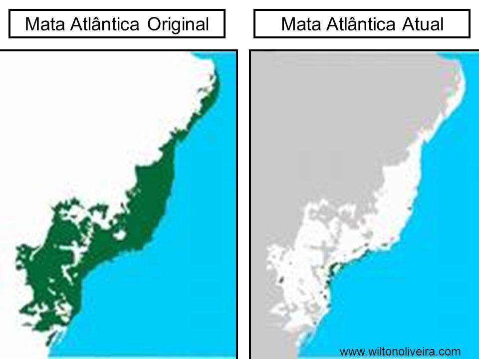 Mata Atlântica OriginalMata Atlântica Atual www.wiltonoliveira.com