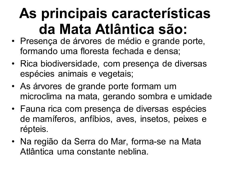 As principais características da Mata Atlântica são: Presença de árvores de médio e grande porte, formando uma floresta fechada e densa; Rica biodiver