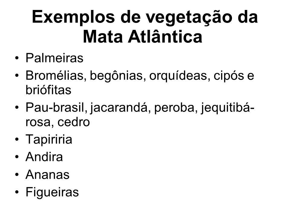 Exemplos de vegetação da Mata Atlântica Palmeiras Bromélias, begônias, orquídeas, cipós e briófitas Pau-brasil, jacarandá, peroba, jequitibá- rosa, ce