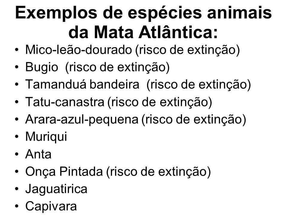 Exemplos de espécies animais da Mata Atlântica: Mico-leão-dourado (risco de extinção) Bugio (risco de extinção) Tamanduá bandeira (risco de extinção)
