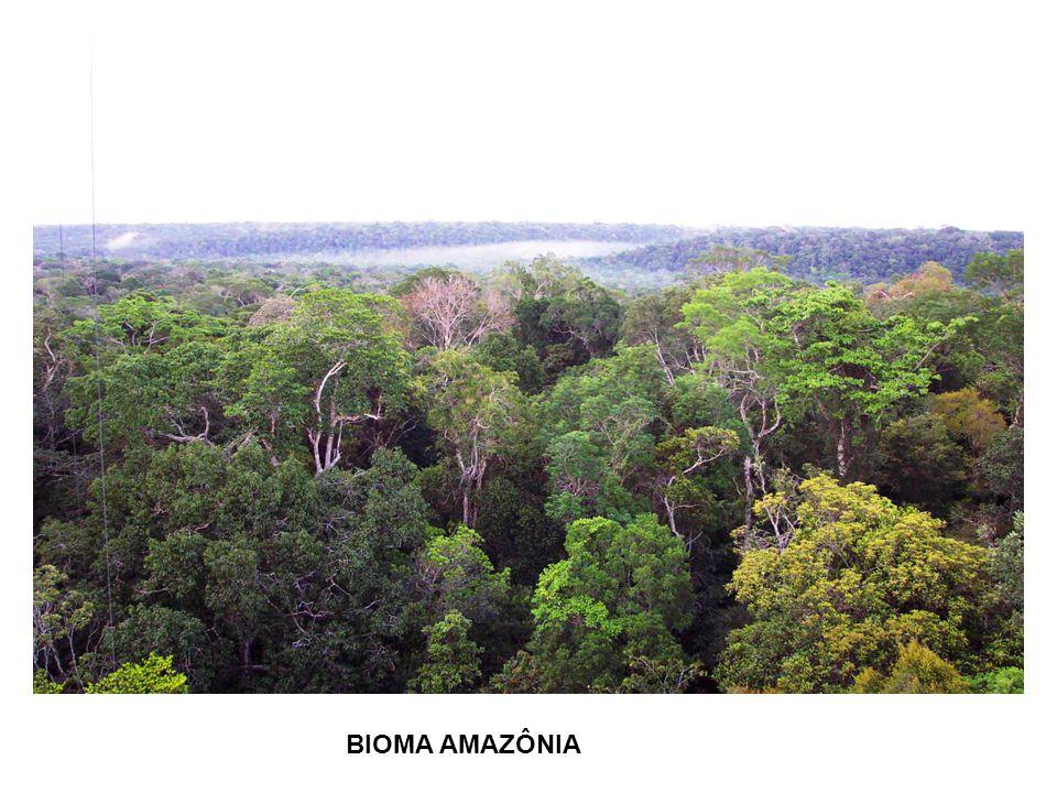 Amazônia A floresta Amazônica é a maior floresta tropical/equatorial do mundo e representa mais de 25% do total dessas florestas.