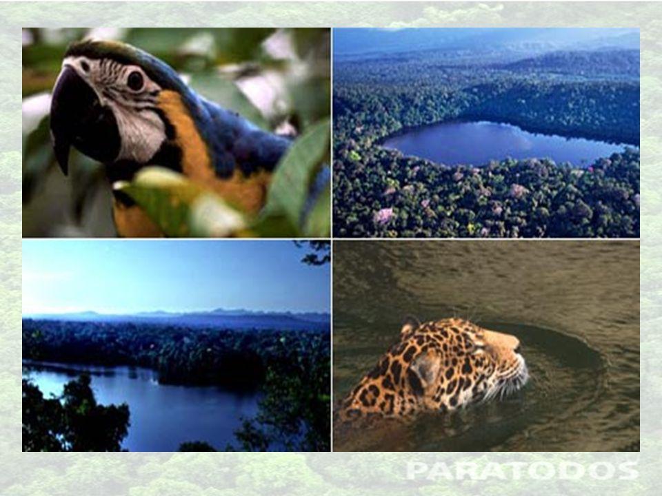 Exemplos de espécies animais da Mata Atlântica: Mico-leão-dourado (risco de extinção) Bugio (risco de extinção) Tamanduá bandeira (risco de extinção) Tatu-canastra (risco de extinção) Arara-azul-pequena (risco de extinção) Muriqui Anta Onça Pintada (risco de extinção) Jaguatirica Capivara