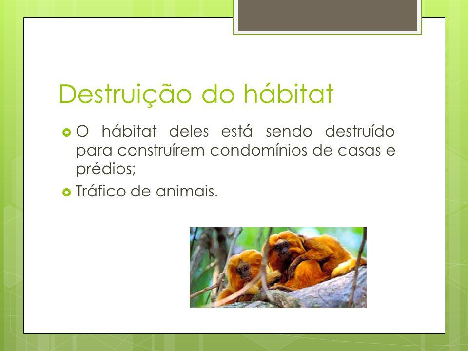 Destruição do hábitat  O hábitat deles está sendo destruído para construírem condomínios de casas e prédios;  Tráfico de animais.