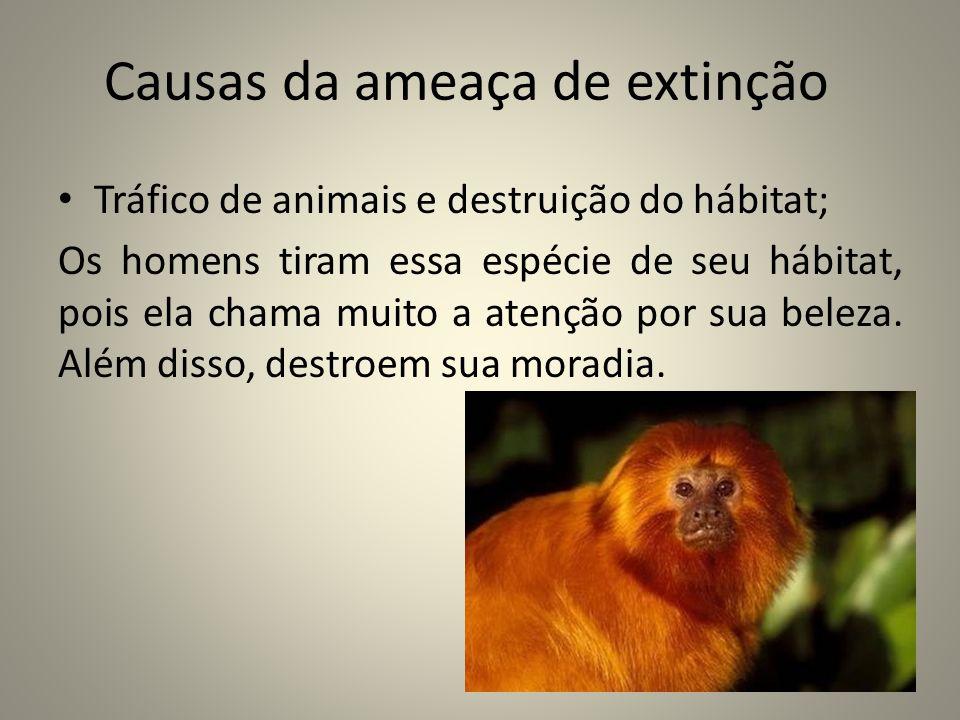 Projeto de preservação Portal São Francisco Esse projeto trabalha de 3 maneiras: Conservação (animal e ambiente); Projetos educativos; Pesquisa.