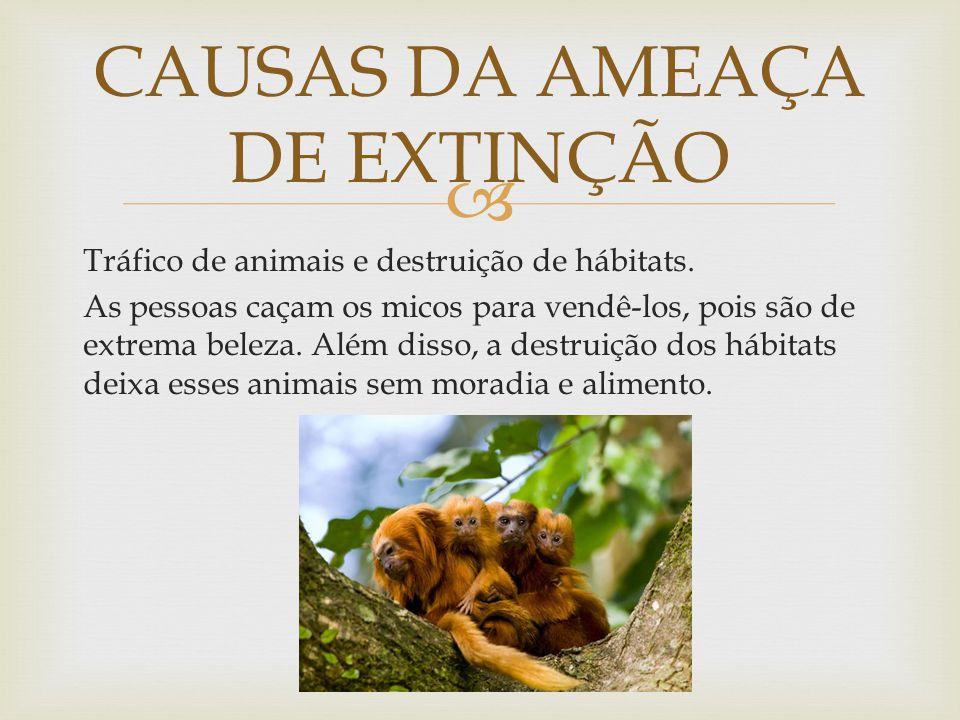  Tráfico de animais e destruição de hábitats. As pessoas caçam os micos para vendê-los, pois são de extrema beleza. Além disso, a destruição dos hábi