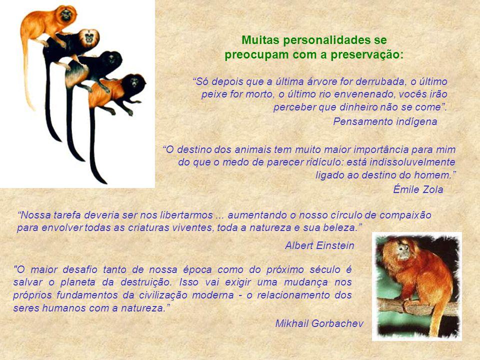 """ConsciênciaEcológica Rildo Silveira Created by rildosilveira@yahoo.com.br Cruzília – MG – Brasil """"Corações duros e cérebros moles andam aos pares"""". Jo"""