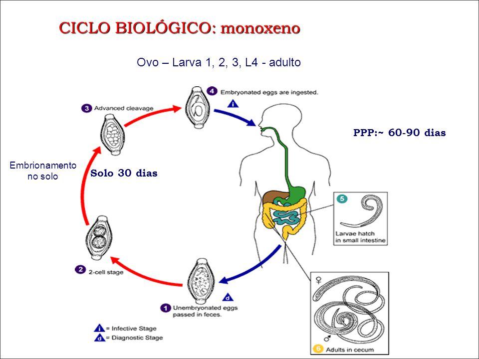 CICLO BIOLÓGICO: monoxeno PPP:~ 60-90 dias Solo 30 dias Ovo – Larva 1, 2, 3, L4 - adulto Embrionamento no solo