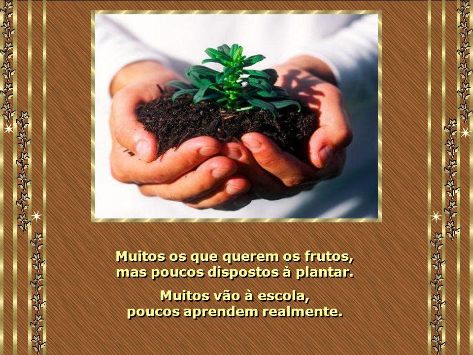 Muitos os que querem os frutos, mas poucos dispostos à plantar.