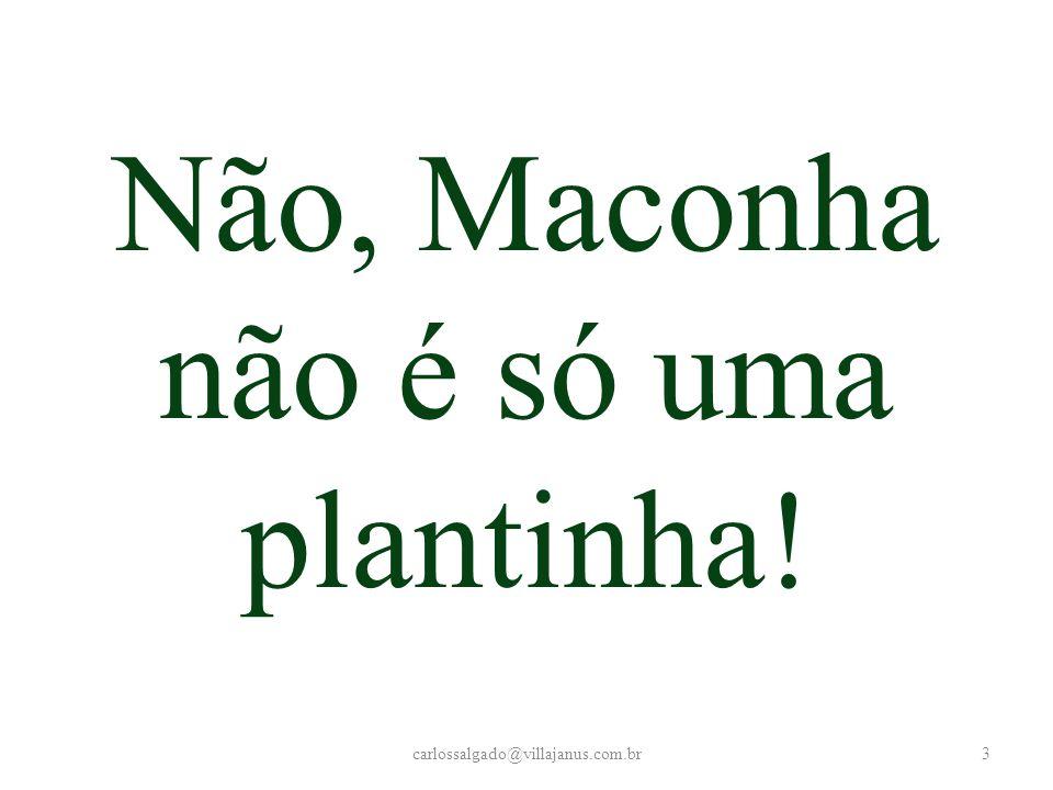 Maconha produz câncer? carlossalgado@villajanus.com.br24