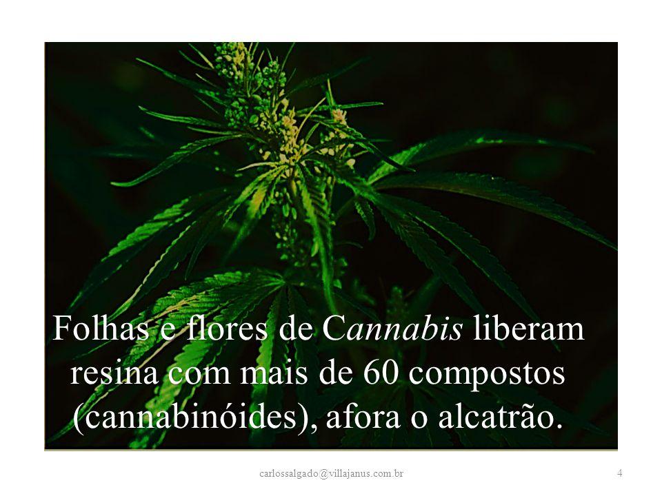 Resumindo... carlossalgado@villajanus.com.br55