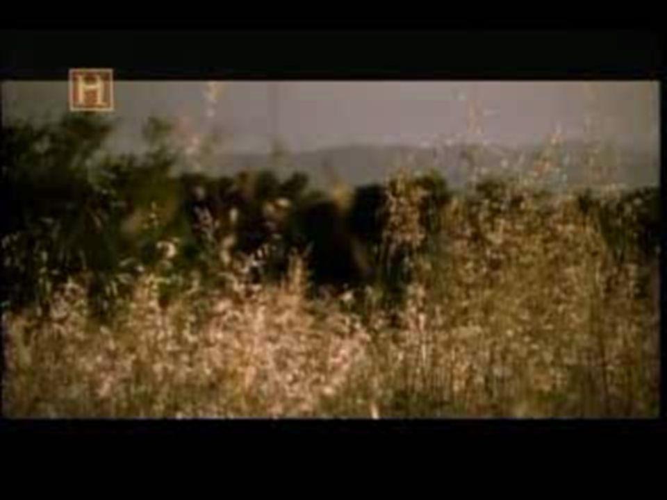 Armas de cerco  Aríete  Balista  Fogo - grego  Gastrafete  Oxibéle  Paliçada  Ponte Móvel  Tartaruga  Torre – de – cerco  Catapulta A balist