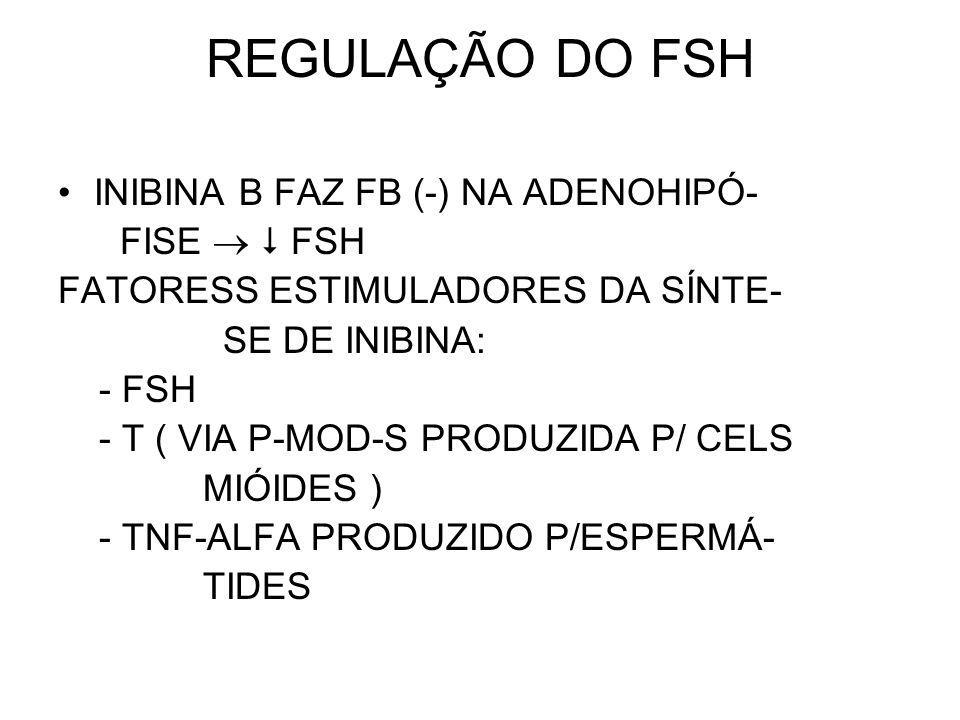 REGULAÇÃO DO FSH INIBINA B FAZ FB (-) NA ADENOHIPÓ- FISE   FSH FATORESS ESTIMULADORES DA SÍNTE- SE DE INIBINA: - FSH - T ( VIA P-MOD-S PRODUZIDA P/