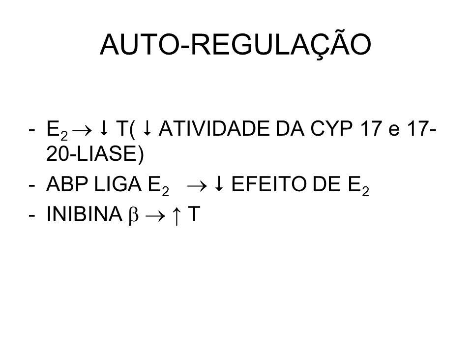 AUTO-REGULAÇÃO -E 2   T(  ATIVIDADE DA CYP 17 e 17- 20-LIASE) -ABP LIGA E 2   EFEITO DE E 2 -INIBINA   ↑ T