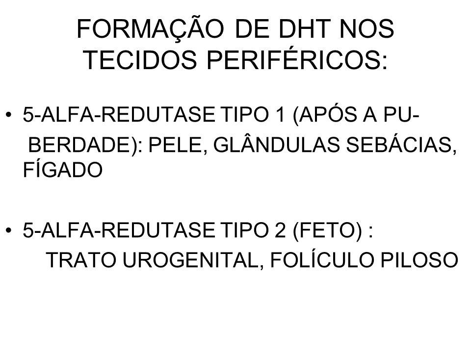 FORMAÇÃO DE DHT NOS TECIDOS PERIFÉRICOS: 5-ALFA-REDUTASE TIPO 1 (APÓS A PU- BERDADE): PELE, GLÂNDULAS SEBÁCIAS, FÍGADO 5-ALFA-REDUTASE TIPO 2 (FETO) :