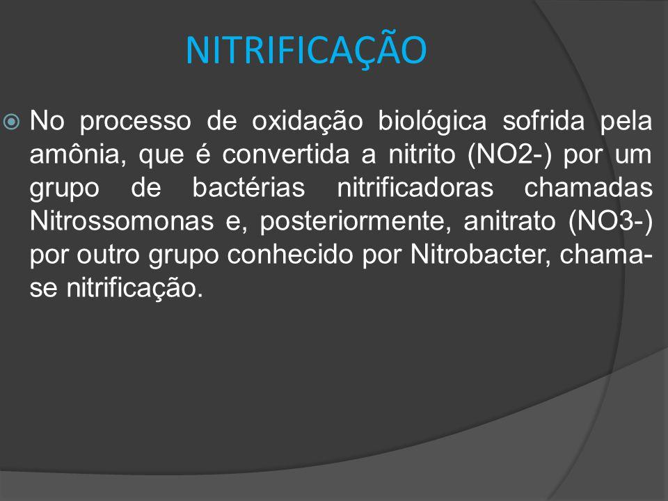 NITRIFICAÇÃO  No processo de oxidação biológica sofrida pela amônia, que é convertida a nitrito (NO2-) por um grupo de bactérias nitrificadoras chama