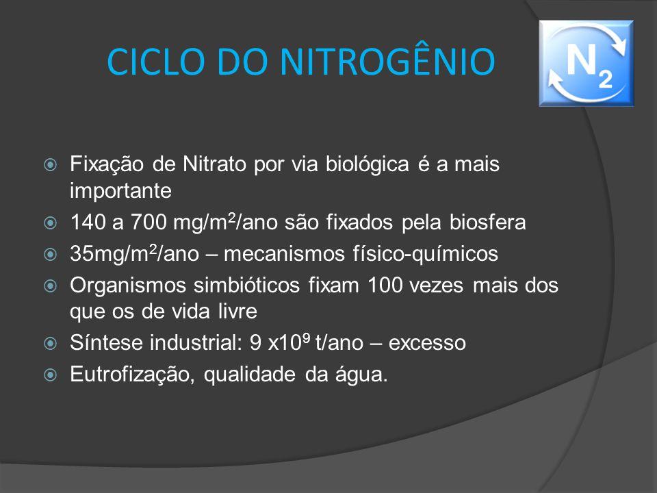 CICLO DO NITROGÊNIO  Fixação de Nitrato por via biológica é a mais importante  140 a 700 mg/m 2 /ano são fixados pela biosfera  35mg/m 2 /ano – mec