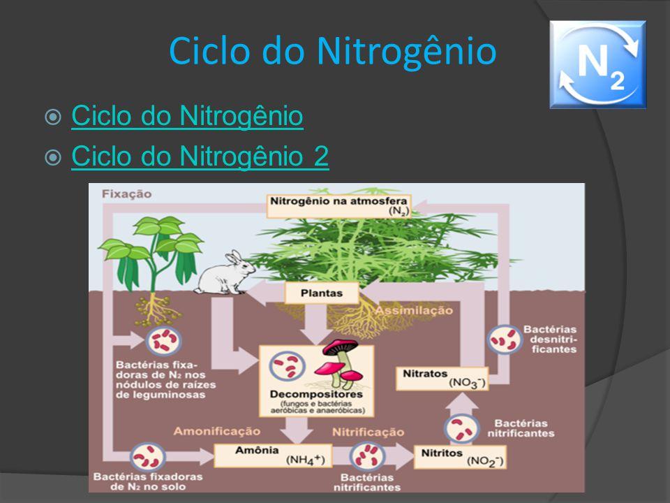 Formas do nitrogênio – Série Nitrogenada  O Nitrogênio pode estar presente em um corpo hídrico nas formas de:  Amônia  Nitrito  Nitrato * O nitrogênio pode fornecer informações sobre o tempo de contaminação da água.