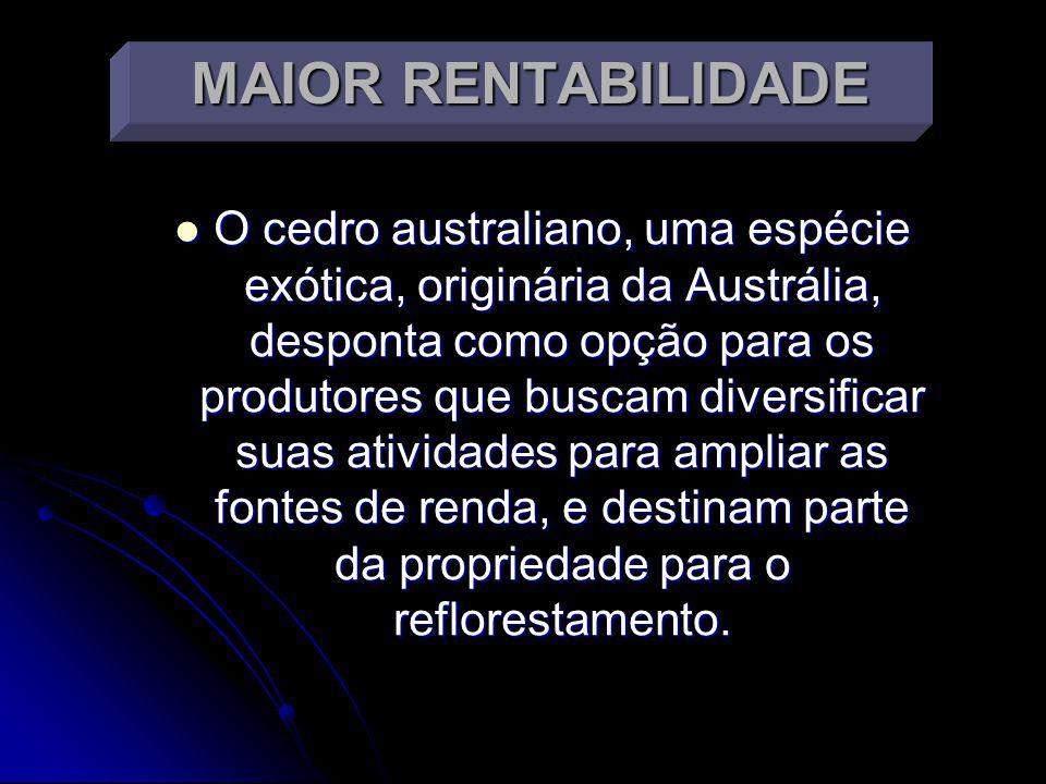 MAIOR RENTABILIDADE O cedro australiano, uma espécie exótica, originária da Austrália, desponta como opção para os produtores que buscam diversificar suas atividades para ampliar as fontes de renda, e destinam parte da propriedade para o reflorestamento.
