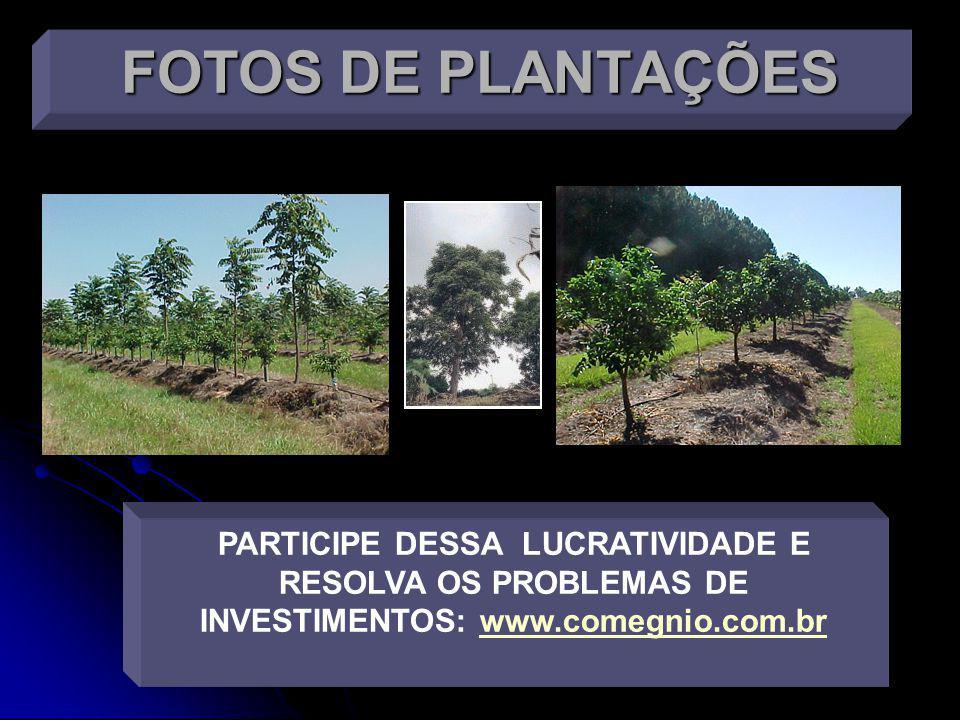 Saiba como realizar um planejamento tributário envolvendo floresta de Cedro Australiano.