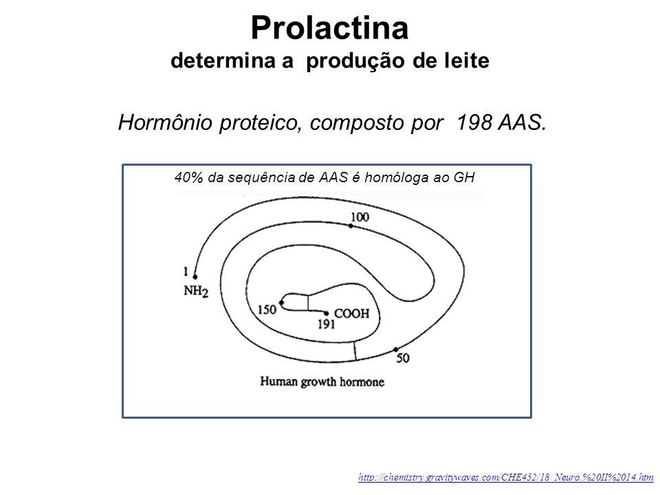 determina a produção de leite Hormônio proteico, composto por 198 AAS. http://chemistry.gravitywaves.com/CHE452/18_Neuro.%20II%2014.htm 40% da sequênc
