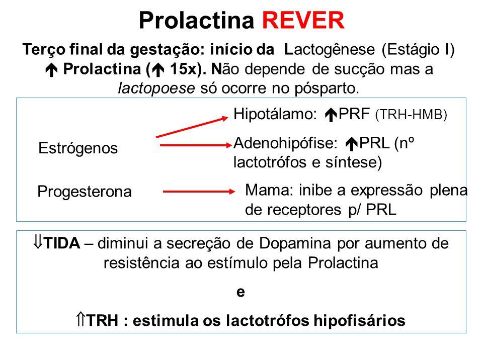 Terço final da gestação: início da Lactogênese (Estágio I)  Prolactina (  15x). Não depende de sucção mas a lactopoese só ocorre no pósparto. Hipotá