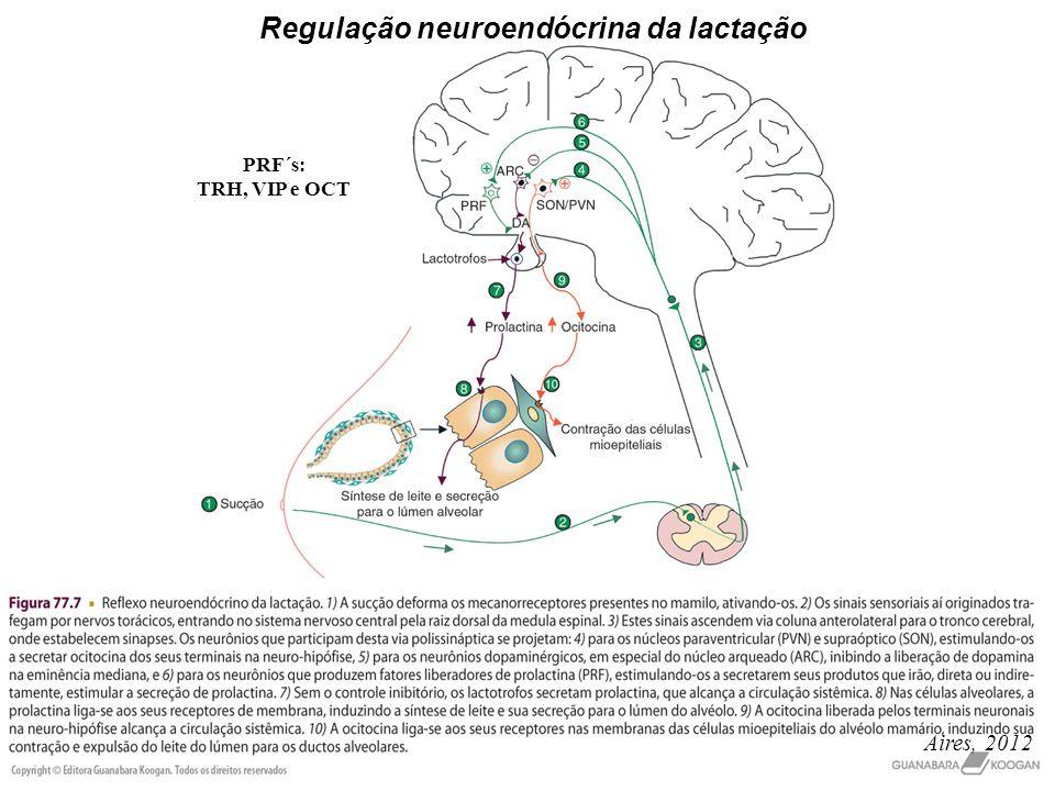 Regulação neuroendócrina da lactação PRF´s: TRH, VIP e OCT Aires, 2012