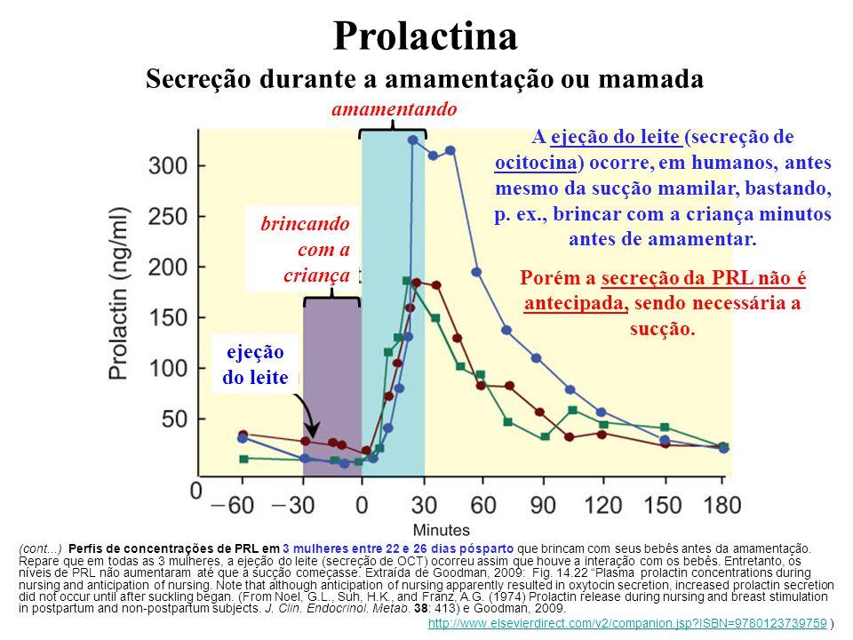 A ejeção do leite (secreção de ocitocina) ocorre, em humanos, antes mesmo da sucção mamilar, bastando, p. ex., brincar com a criança minutos antes de