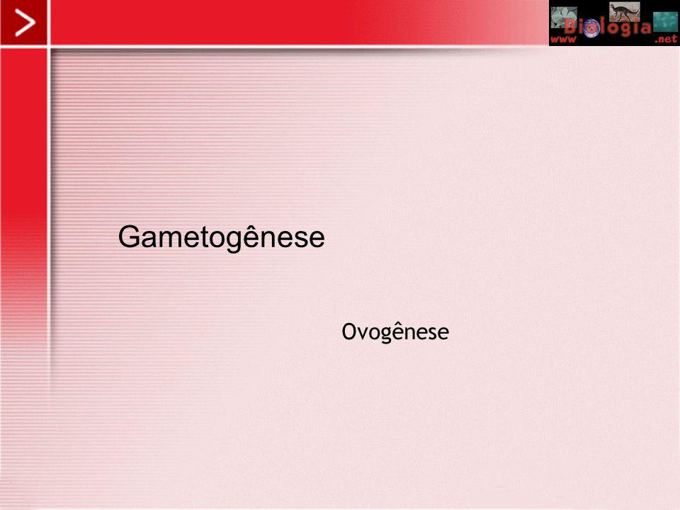 Gametogênese Ovogênese