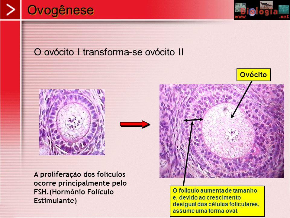 Imagens Óvulo Óvulo rodeado de espermatozóide Espermatozóide tentando penetrar Zigoto