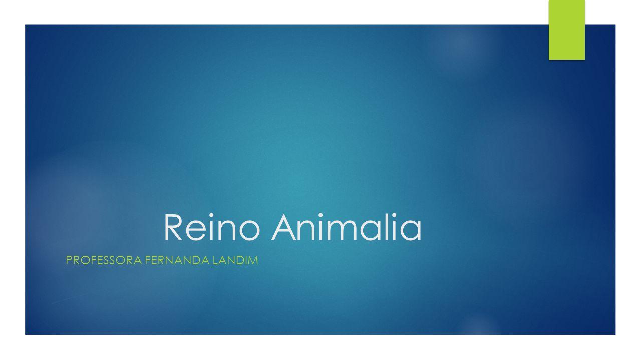 Reino Animalia PROFESSORA FERNANDA LANDIM