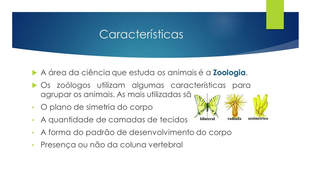 Características  Animais invertebrados : São os animais que não possuem coluna vertebral.
