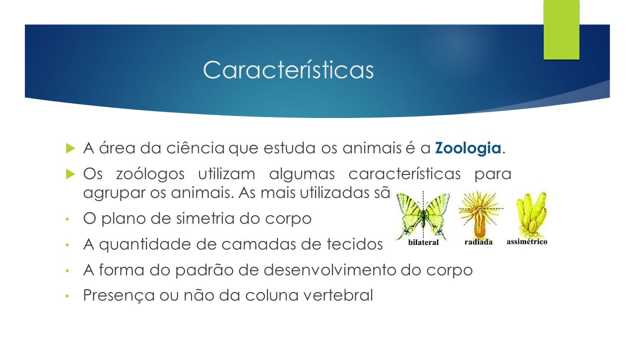 Características  A área da ciência que estuda os animais é a Zoologia.  Os zoólogos utilizam algumas características para agrupar os animais. As mai