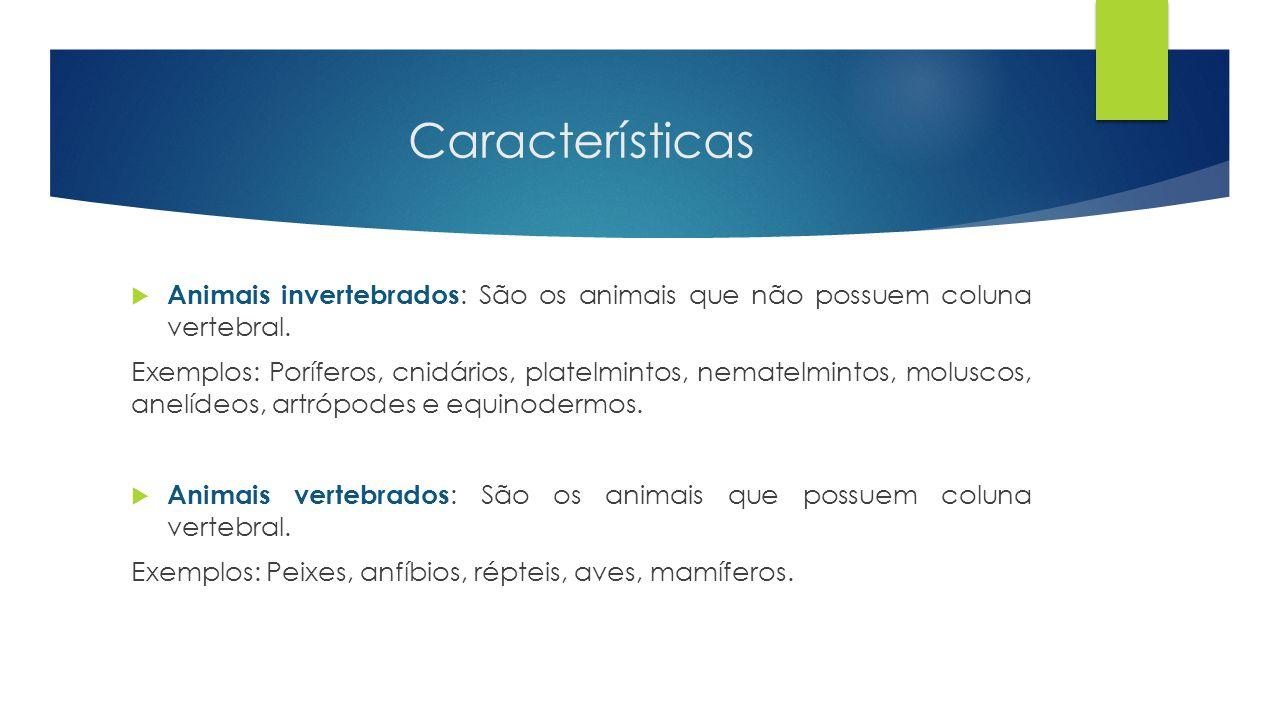 Características  Animais invertebrados : São os animais que não possuem coluna vertebral. Exemplos: Poríferos, cnidários, platelmintos, nematelmintos