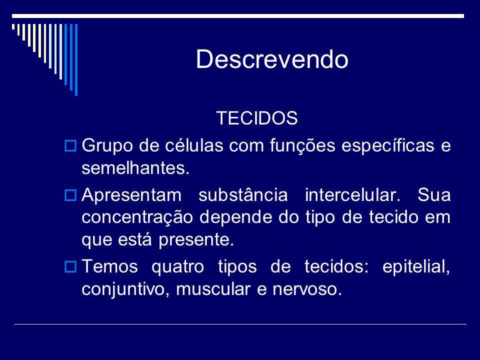 Descrevendo TECIDOS  Grupo de células com funções específicas e semelhantes.  Apresentam substância intercelular. Sua concentração depende do tipo d