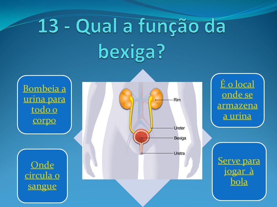 Bombeia a urina para todo o corpo É o local onde se armazena a urina Onde circula o sangue Serve para jogar à bola